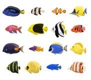 Uppsättning för fisk för korallrev vektor illustrationer