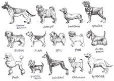 Uppsättning för hundkapplöpningavelvektor royaltyfri illustrationer