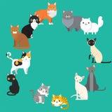 Uppsättning för husdjur för roliga avel för tecknad filmkatttecken olika gullig djur stock illustrationer