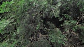 uppsättning för 4 K av längd i fot räknatsnigeln i naturlig miljö bland gräsplansidorna, når regn, flyttning och att ha sovit lager videofilmer