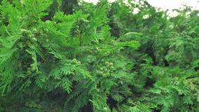 uppsättning för 4 K av längd i fot räknatsnigeln i naturlig miljö bland gräsplansidorna, når regn, flyttning och att ha sovit arkivfilmer