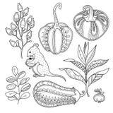Uppsättning för magiträdgårdobjekt i klotterstil stock illustrationer