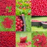 Uppsättning för röda vinbär som gör fruktsaft arkivfoto