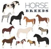 Uppsättning för symbol för hästavel 7 serie för illustration för djurtecknad filmlantgård Plan design Royaltyfri Bild