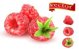 Uppsättning för symboler för vektor för frukt 3d för hallon söt Realistiska Berry Raspberries Icon Set Samling av mogna hallon Royaltyfri Bild