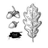 Uppsättning för teckning för för vektorekblad och ekollon Höstbeståndsdelar vektor illustrationer