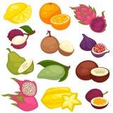 Uppsättning för tropiska frukter Citron apelsin, pitaya, carambola, kokosnöt, fikonträd, avokado, vektor illustrationer