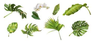 Uppsättning för tropiska växter Arkivbild