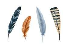 Uppsättning för vattenfärgfågelfjädrar Hand målade konstnärliga beståndsdelar för design Vektor Illustrationer