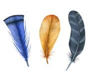 Uppsättning för vattenfärgfågelfjädrar Hand målade konstnärliga beståndsdelar för design Arkivfoton