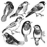 Uppsättning för vektordiagram av hand drog fåglar på vit bakgrund Färgpulverteckning, grafisk stil Gulliga fåglar för din design stock illustrationer