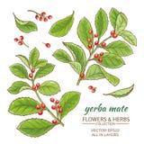Uppsättning för Yerba kompisvektor vektor illustrationer