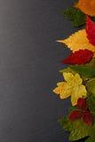 Uppsättning torkade sidor av olik färg i bakgrundstexturen Royaltyfri Fotografi