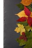 Uppsättning torkade sidor av olik färg i bakgrundstexturen Royaltyfri Foto