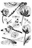 Uppsättningen av blom- beståndsdelar för vektor med den svartvita handen drog örter, vildblommor och sländan skissar in stil stock illustrationer
