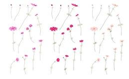 Uppsättningen av det lösa fältet för sommar blommar för hälsningkort Blomma blommor, botanisk naturlig illustration på vit i hand Arkivfoto