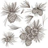 Uppsättningen av det realistiska pälsträdet för vektorn konserverar för den Chirstmas designen royaltyfri illustrationer