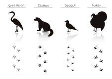 Uppsättningen av djuret och fågeln skuggar med namn Vektoruppsättning av den svarta fören Royaltyfria Foton