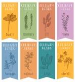 Uppsättningen av 8 drog växt- etiketter skissar förestående Vertikala baner med basilika, körvel, rosemari, dill, vis man, dragon vektor illustrationer