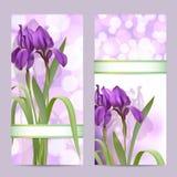 Uppsättningen av fjädrar baner med purpurfärgade Irisblommor Royaltyfria Foton