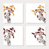 Uppsättningen av fyra kort med röd chokeberry förgrena sig Royaltyfri Foto