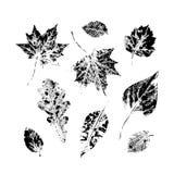 Uppsättningen av hösten, nedgång lämnar färgpulver för att skriva ut, att stämpla uppsättningen Royaltyfri Fotografi