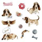 Uppsättningen av hundkapplöpningbassethund i olikt poserar med leksaker vektor illustrationer