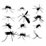 Uppsättningen av illustrationen för myggakonturvektorn, stänger sig upp myggakonturn - vektor vektor illustrationer