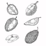 Uppsättningen av illustrationer, symboler av en durian bär frukt Fotografering för Bildbyråer
