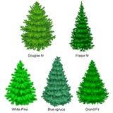 Uppsättningen av julvektorträdet som gran eller sörjer den blåa granen för beröm för nytt år utan feriegarnering, evergreen vektor illustrationer