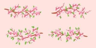 Uppsättningen av körsbäret förgrena sig i blom Körsbärsröda blomningar Vår vektor Royaltyfri Fotografi