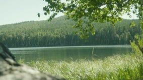 1 3 Uppsättningen av längd i fot räknat med sjön i skogen i förgrunden där är filialer av träd Trädfilial i stock video