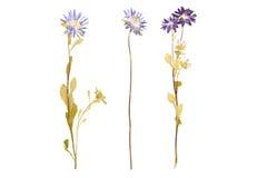 Uppsättningen av lösa blommor tryckte på, vit bakgrund Arkivbild