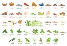 Uppsättningen av 40 olika kulinariska örter, art och smaktillsatser i tecknad film utformar Spanska namn stock illustrationer