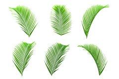 Uppsättningen av palmblad isolerade på vit för dekor ditt projekt arkivfoton