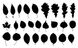 Uppsättningen av parkerar bladkonturer vektor illustrationer
