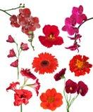 Uppsättningen av röda nio färgar blommor som isoleras på vit royaltyfri bild