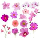 Uppsättningen av fjortonrosa färg färgar blommor på vit Royaltyfri Foto