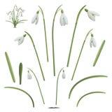 Uppsättningen av snödroppe blommar beståndsdelar Arkivfoto