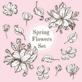Uppsättningen av svartvita naturbeståndsdelar, sidor blommar separat och att blomma förgrena sig körsbäret, päronblomman, sakura stock illustrationer