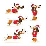 Uppsättningen av tecknad filmbrunttaxen i hatt för jultomten` s och det röda omslaget i olikt poserar Arkivfoton