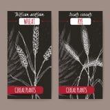 Uppsättningen av två etiketter med cereale för Secale aka för Triticum för brödvete för aestivum och för råg aka skissar på svart Fotografering för Bildbyråer