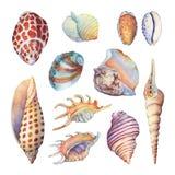 Uppsättningen av undervattens- liv anmärker - illustrationer av den olika tropiska snäckskal och sjöstjärnan Arkivbild