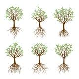 Uppsättningen av vårträd med rotar vektor illustrationer