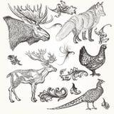 Uppsättningen av vektorn specificerade djur och krusidullar för design royaltyfri illustrationer