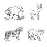 Uppsättningen av vilda djur skissar in stil, vektorillustration Royaltyfri Fotografi
