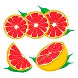 Uppsättningen bär frukt orange grapefruktcitronlimefrukt Royaltyfria Bilder