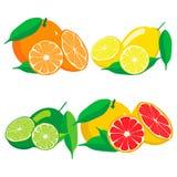 Uppsättningen bär frukt orange grapefruktcitronlimefrukt Arkivfoto
