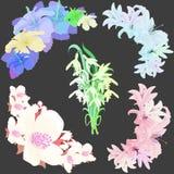 Uppsättningen blommar liljajasmin, hibiskusen, snödroppe Vektor Illustratio Royaltyfria Foton