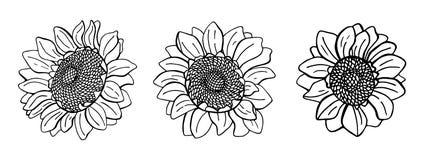 Upps?ttning av hand drog solrosor vektor illustrationer